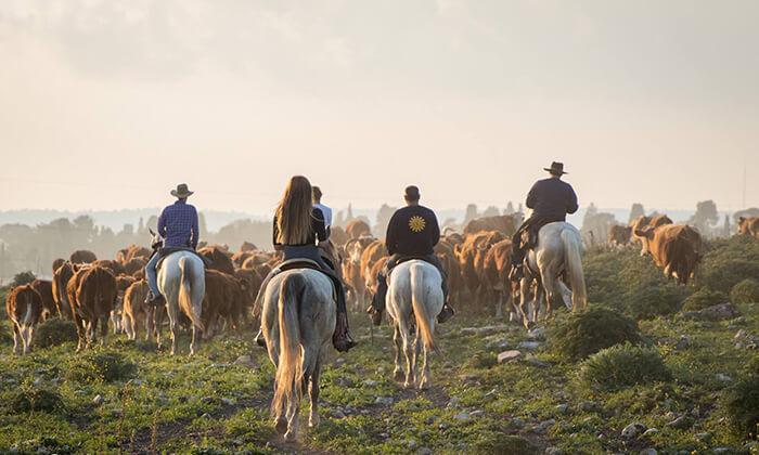 7 טיול רכיבת סוסים באזור רמות מנשה