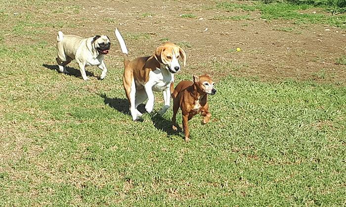 """3 פנסיון יומי לכלב ב-""""חוות הדוד משה"""", כפר טרומן"""