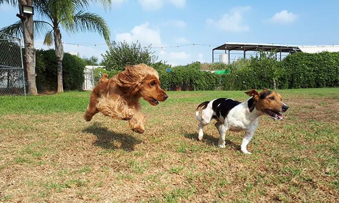 """2 פנסיון יומי לכלב ב-""""חוות הדוד משה"""", כפר טרומן"""