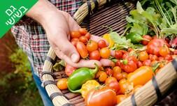 קטיף ירקות לכל המשפחה