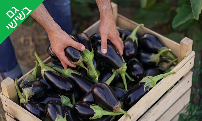 6 קטיף ירקות במתחם 'תות בשדה - משק אריאל' במושב קדימה
