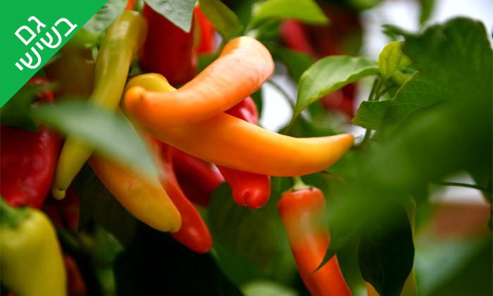 5 קטיף ירקות במתחם 'תות בשדה - משק אריאל' במושב קדימה