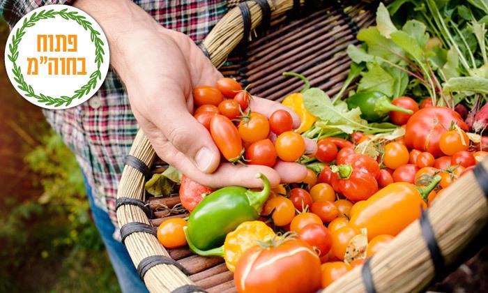 2 קטיף ירקות במתחם 'תות בשדה - משק אריאל' במושב קדימה