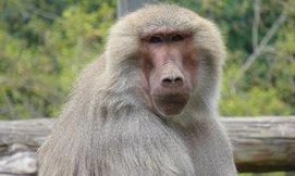 כניסה למקלט הקופים ביער בן שמן