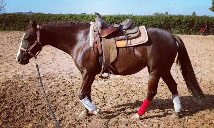 3 קייטנת רכיבה על סוסים בחופשת הפסח, ארנה מועדון רכיבה, כפר סרקין