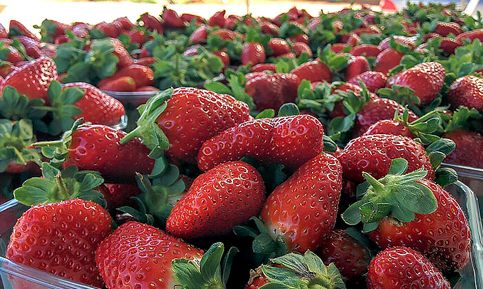 2 קטיף תותים בתותלאנד, משק טל, הוד השרון