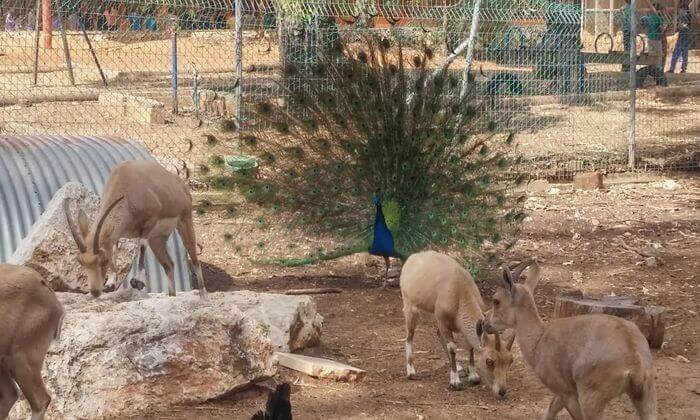 """3 כניסה לחווה החקלאית """"לגעת בטבע"""" בכפר הירוק"""
