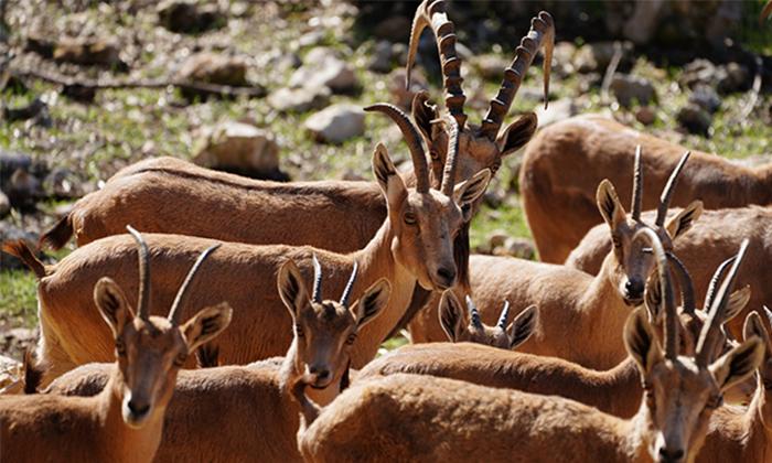 """6 גן החיות הלימודי בחיפה, מול נופי הכרמל, גם בסופ""""ש"""