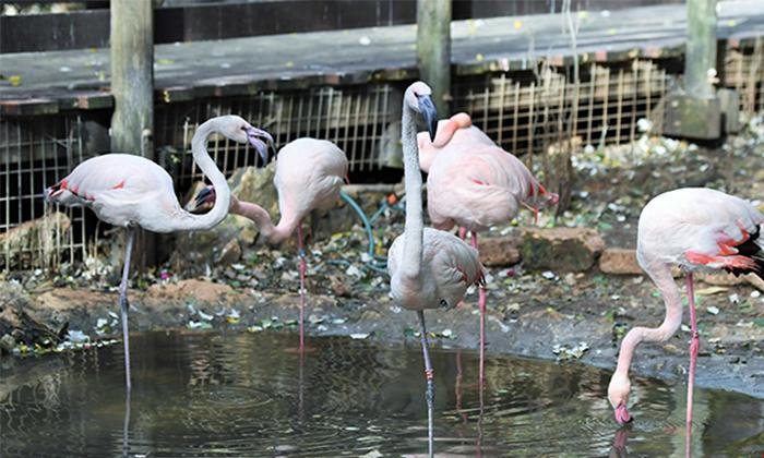 """7 גן החיות הלימודי בחיפה, מול נופי הכרמל, גם בסופ""""ש"""