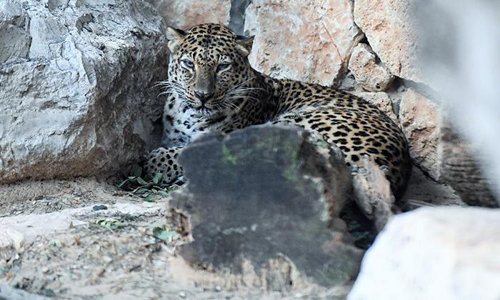 """11 גן החיות הלימודי בחיפה, מול נופי הכרמל, גם בסופ""""ש"""