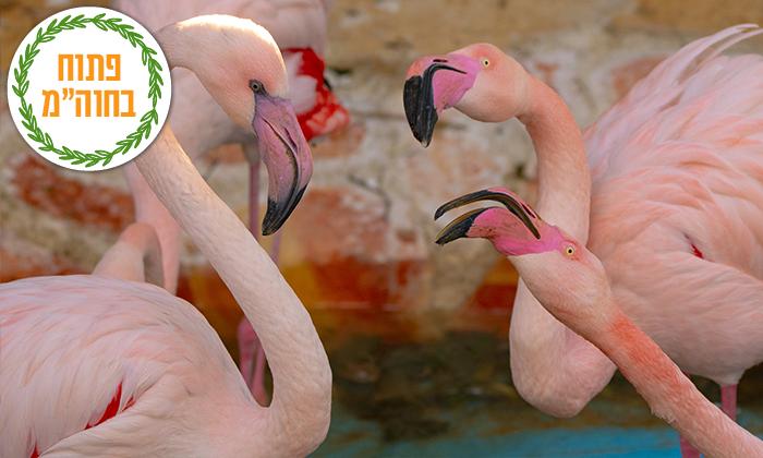 """2 גן החיות הלימודי בחיפה, מול נופי הכרמל, גם בסופ""""ש"""