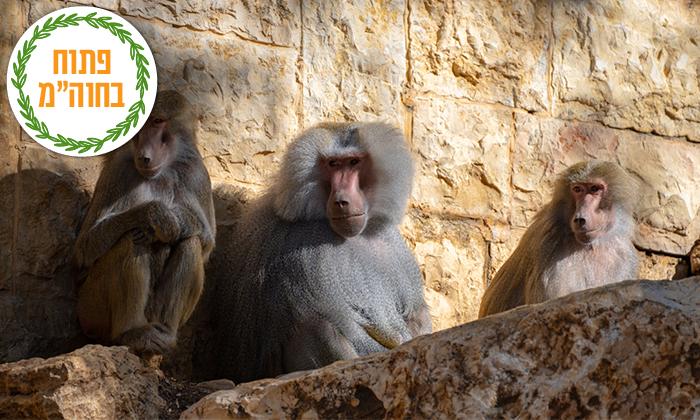 """12 גן החיות הלימודי בחיפה, מול נופי הכרמל, גם בסופ""""ש"""