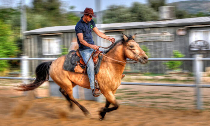4 חוות צהלה - רכיבה על סוסים