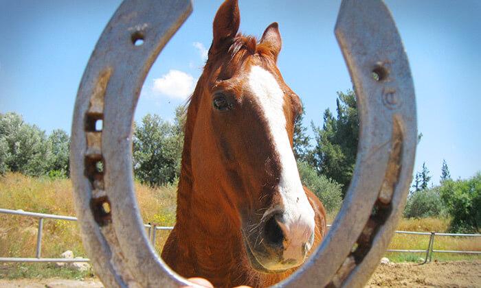 10 חוות צהלה - רכיבה על סוסים