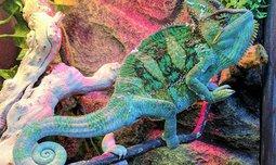 """סיור במוזיאון הטבע התנ""""כי"""