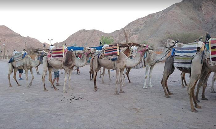 16 כניסה לפארק החבלים בחוות הגמלים אילת, כולל קפיצת בנג'ו
