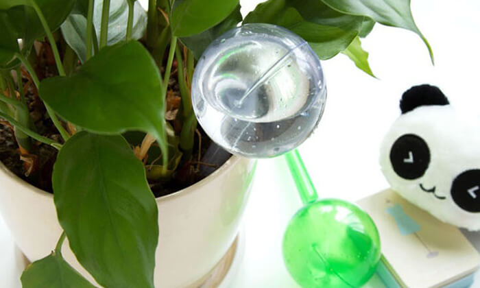 3 סט 6 בועות השקיה אוטומטיות לעציצים