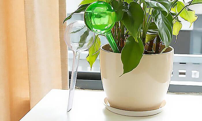 5 סט 6 בועות השקיה אוטומטיות לעציצים