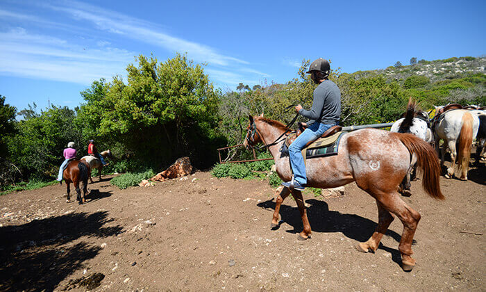 7 יום כיף בחוויית הרוכבים בבית אורן