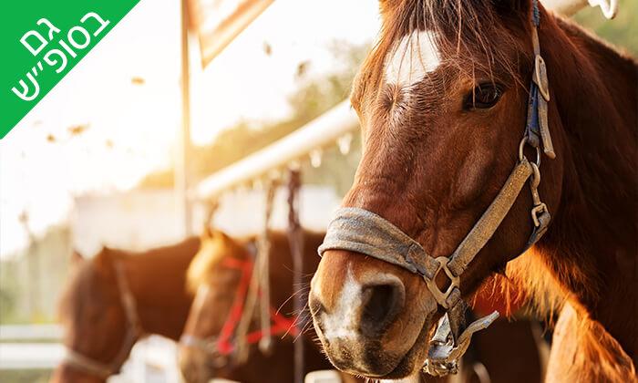 3 טיול רכיבה על סוסים - חווית הרוכבים