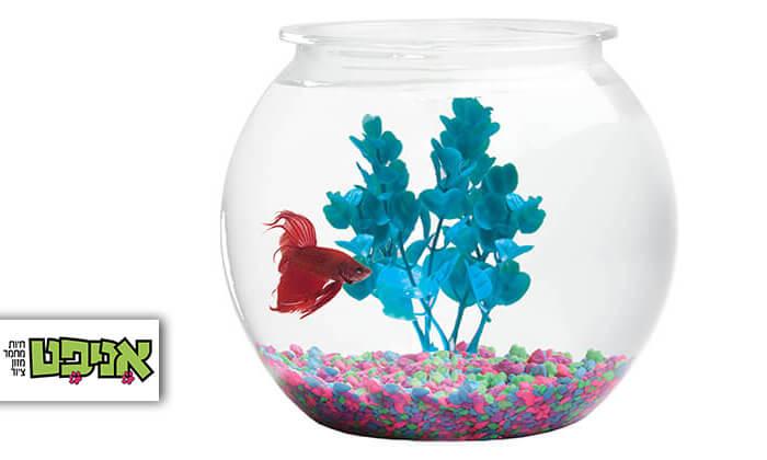 2 צנצנת זכוכית עם דג קרב