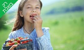 """קטיף תות, טעימות וסלסלת 1 ק""""ג"""