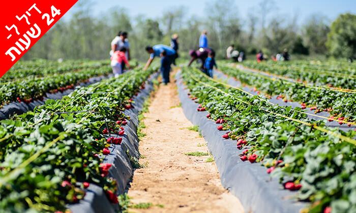 4 דיל ל-24 שעות: קטיף תותים ב'תות בשדה - משק אריאל', קדימה