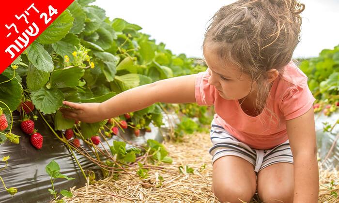 2 דיל ל-24 שעות: קטיף תותים ב'תות בשדה - משק אריאל', קדימה