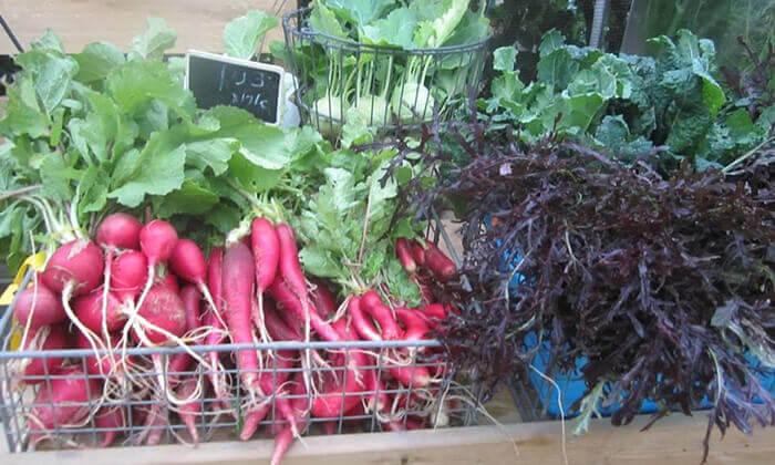 """5 משתלת הרא""""ה, בית חזון - קטיף ירקות"""