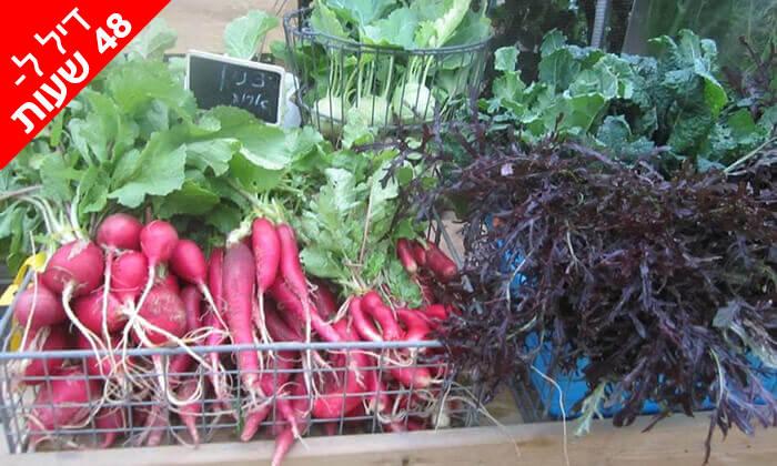 """5 דיל ל-48 שעות: קטיף ירקות ביום העצמאות במשתלת הרא""""ה"""