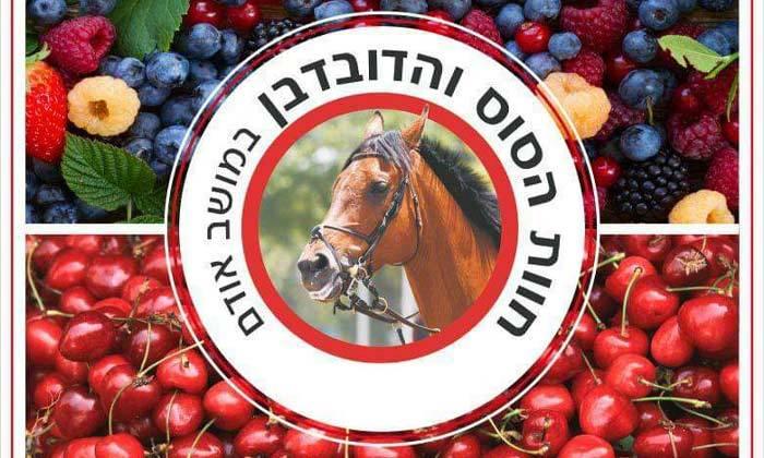 6 קטיף פירות יער בחוות הסוס והדובדבן, מושב אודם