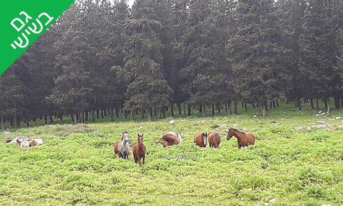 4 טיול רכיבה בגליל על סוסים - חוות סוסי אדמה, אלון הגליל