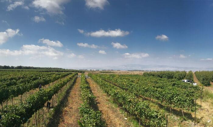 5 סיור וטעימות יין - יקב אבוהב, צפת