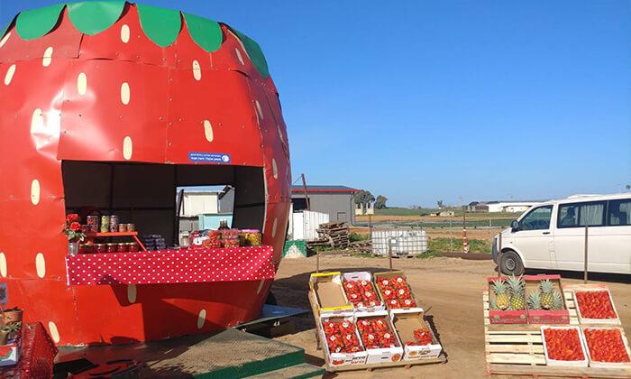 4 קטיף תותים במשק אקלר, קדימה
