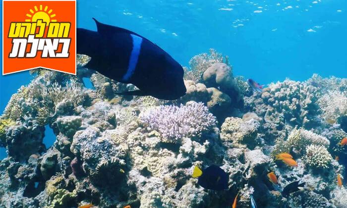 3 צלילת שנורקלים באילת, מועדון Ahla Diving