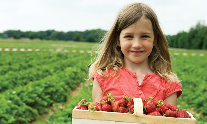 2 לזמן מוגבל: קטיף תותים בתותלאנד, משק טל הוד השרון - גם ביום העצמאות