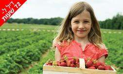 קטיף וטעימות תותים