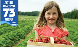 קטיף וטעימות תותים, גם בעצמאות