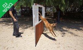 מפגש אילוף כלבים-נפתלי פרידמן