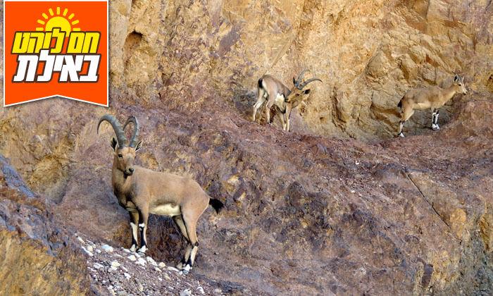 9 אילת טורס - טיול ג'יפים בהרי אילת