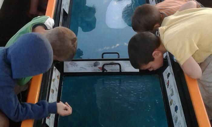 2 סיור ימי קבוצתי בספינת זכוכית עם המפלט הדרומי, אילת