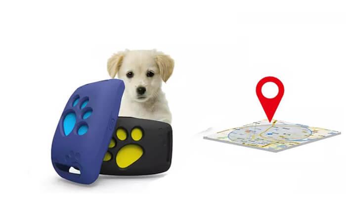 2 מכשיר איתור לכלבים וחתולים
