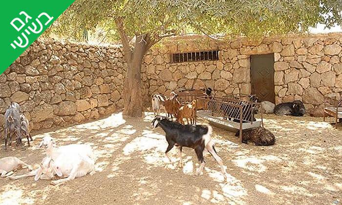 5 מוזיאון עין יעל - כניסה ופעילות משפחתית, ירושלים