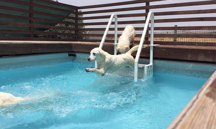 6 לינה במלון בוטיק לכלבים Dog School, מושב פתחיה