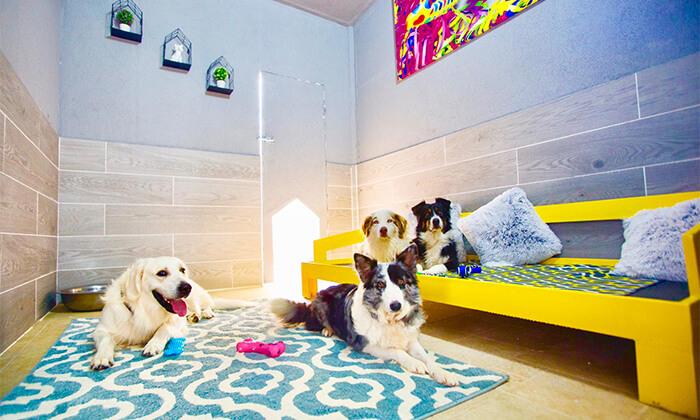 2 לינה במלון בוטיק לכלבים Dog School, מושב פתחיה
