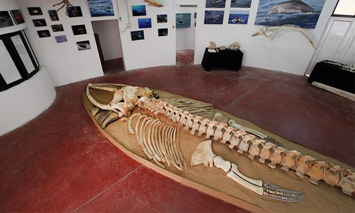 6 השתתפות בסיור לבחירה במרכז הדולפין והים, אשדוד
