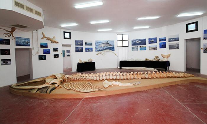 9 השתתפות בסיור לבחירה במרכז הדולפין והים, אשדוד