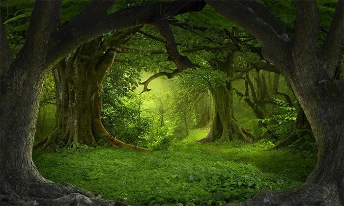 3 פסטיבל ספר הג'ונגל עם ענבלי בא-לי, קריית מוצקין