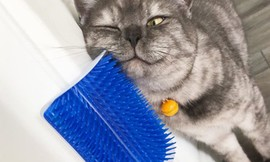 זוג מגרדות פינתיות לחתול