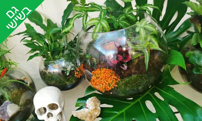 2 סדנת הכנת טרריום עם צמחים אקזוטיים - אקווה טרה ג'ונגל, פתח תקווה